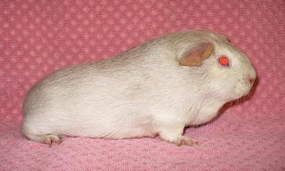 white-beige-argente